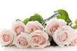 Obrazy na płótnie, fototapety, zdjęcia, fotoobrazy drukowane : Flowers