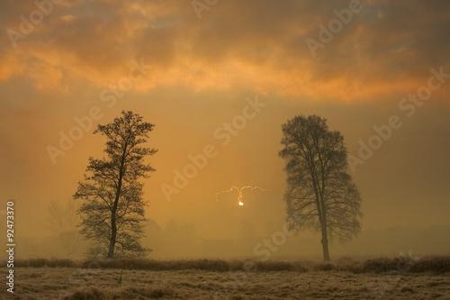 Fototapeta dwa drzewa