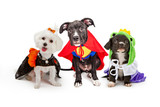 Cute Puppy Dogs Wearing Halloween Costumes
