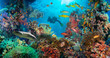 Tropical Anthias fish with net fire corals
