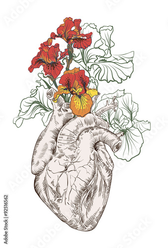 Fototapeta samoprzylepna drawing Human heart with flowers