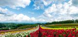 Fototapety Hokkaido Colorful flower, Japan Jul 2015