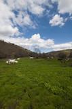 Prado con vacas
