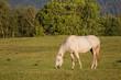 Obrazy na płótnie, fototapety, zdjęcia, fotoobrazy drukowane : cheval au pré
