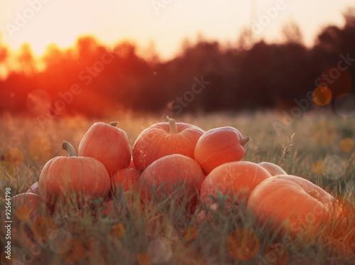 Leinwandbild Motiv pumpkins outdoor