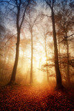 Faszinierendes Licht bei Nebel im Wald