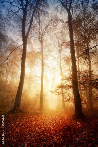 Zdjęcia na płótnie, fototapety na wymiar, obrazy na ścianę : Faszinierendes Licht bei Nebel im Wald