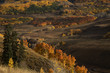 Autumn foilage near Crested Butte Colorado in the Gunnison National Forest
