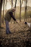 An old man and his dog searching white truffle in a forest