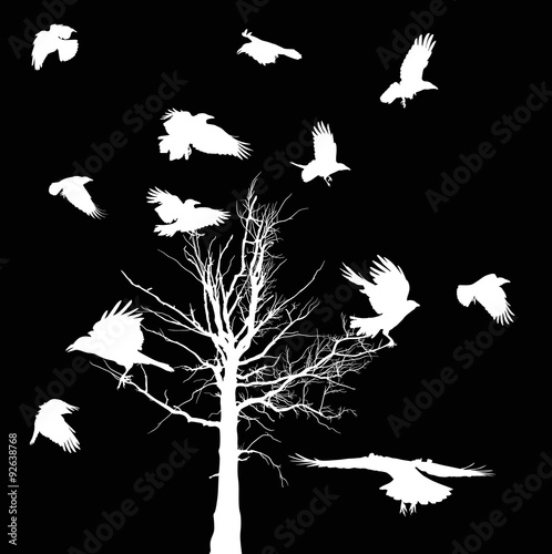 Plakat white bare tree and crows silhouettes isolated on black