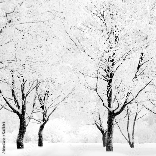 Fototapeta Winter forest with snow