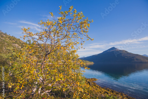 Aluminium Beautiful vibrant summer norwegian landscape with coast of fjord with a blue sky, blue clear water, norway, norge