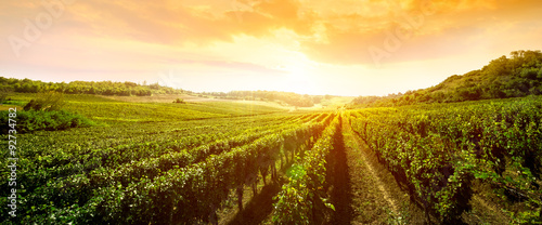 landscape of vineyard