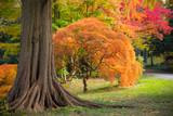 Colorful autumn foliage in nature landscape