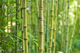 Green bamboo nature backgrounds