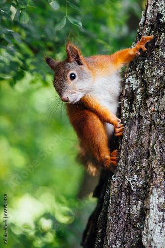 Poster squirrel on a tree, green bokeh background