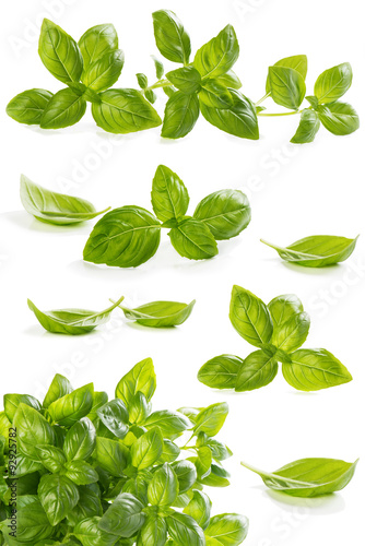 .Collection leaves of basil