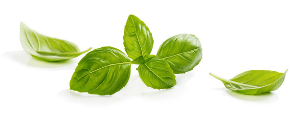 Green leaves of basil © denira