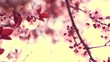 Spring blossom background. Beautiful nature with blooming tree and sun flares