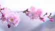 Beautiful spring flower close-up. Beauty nature scene with blooming trees