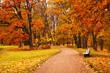 Obrazy na płótnie, fototapety, zdjęcia, fotoobrazy drukowane : colorful autumn trees in park