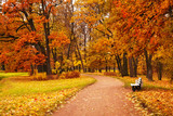 Fototapety colorful autumn trees in park