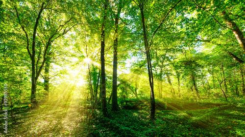 Fotobehang Betoverde Bos Wald Panorama im goldenen Sonnenschein