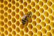 Obrazy na płótnie, fototapety, zdjęcia, fotoobrazy drukowane : bees