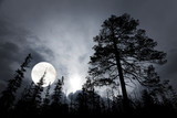 spooky forest with silhouettes of trees - 92989585