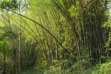 floresta de bambu em um parque de São Paulo, Brasil