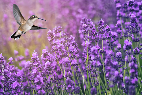 Hummingbird feeding on wild flowers - 92995141