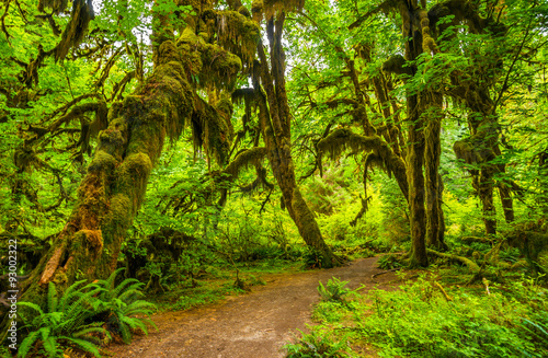 hoh-rain-forest-en-el-parque-nacional-olympic-washington