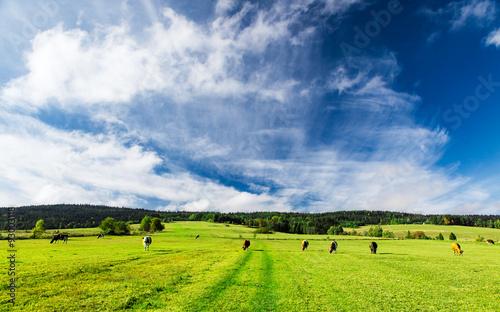 obraz lub plakat Himmel über der Weide
