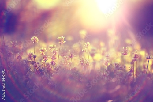 Poster Snoeien summer landscape background sun flowers Rays