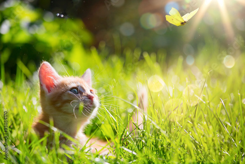 Valokuva art Young cat / kitten hunting a ladybug with Back Lit