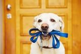 Fototapety Dog with leash
