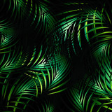Fototapety Jungle Night Background