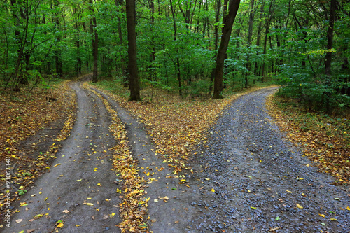 Foto op Canvas Weg in bos fork roads