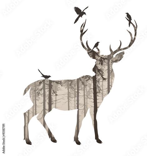 deer © kozerog2015