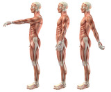 3D medical figure showing shoulder flexion, extension and hypere poster