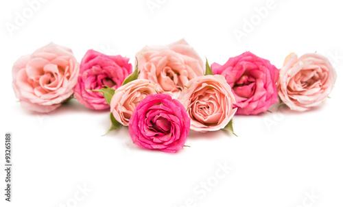 Zdjęcia na płótnie, fototapety, obrazy : pink rose