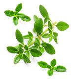 Thyme fresh herb isolated  - 93294520