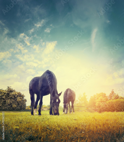 Horses grazing in autumn meadow on background of trees and sky
