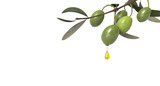olive branch with oil drop  - 93412520