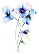 Blue pansy flowers - 93447539