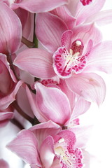 Tropical pink orchid isolated over white background © Denizo