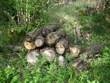Log pile for wildlife