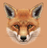 Illustrative Portrait of a Red Fox. The cute fluffy face of forest Fox. - 93597502