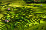 Terraced rice fields, Yen Bai province, Vietnam