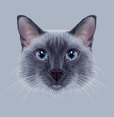 Illustrative Portrait of a Thai Cat. Cute blue point Traditional Siamese Cat.